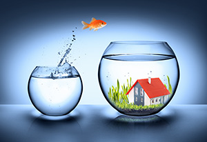 Edited-Fishbowl