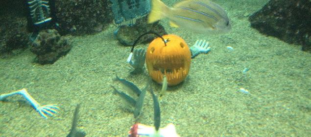 Maui_Ocean_Center_Halloween