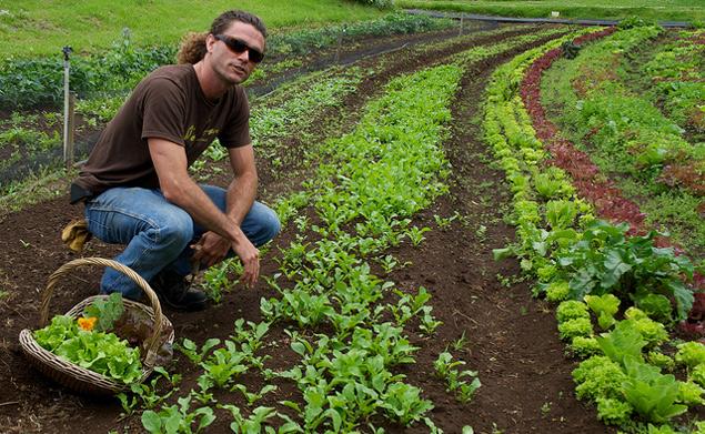 organic farm Maui