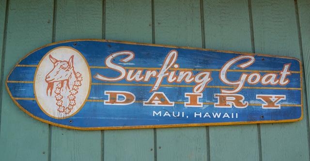 surfing_goat